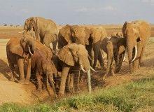 Wildlife Pictures Taken in Tsavo National Park : Ashnil