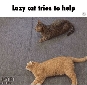 When you're lazy but you gotta help your squad | Funny Pictures, Quotes, Pics, Photos, Images