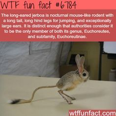 17 Fun Facts About Animals That Might Surprise You – Ellison Wylie