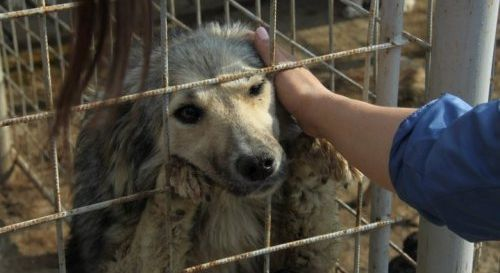 Romanian Government: STOP mass killing dogs! Adopt mass sterilization!SPEAKOUT AGAINST THIS BRUTAL ATROCITY! TELL THE Romanian Government: STOP THE MASSIVE DOG SLAUGHTER! IMPLEMENT MASS STERILIZATION! PLZ Sign & Share Widely to STOP THIS INSANE CARNAGE!