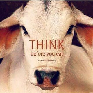 There is no difference between the dogs cats and horses we love and the cows pigs chickens and lambs we eat wear and exploit for milk and eggs. Life is precious. Please be vegan for the animals ♡