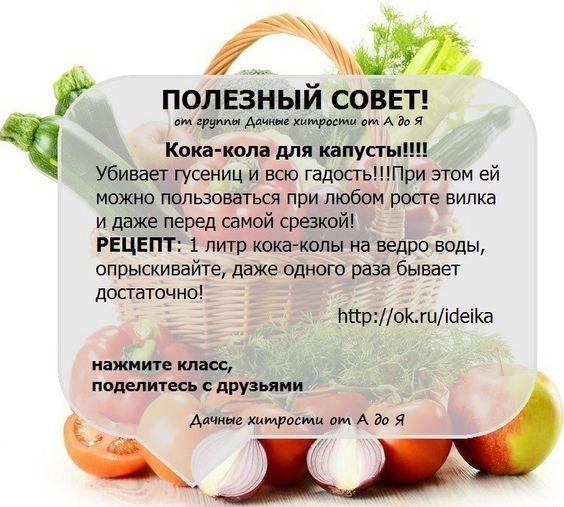 Делюсь - Садоводка