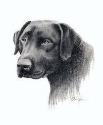 Image result for artist drawings dog faces