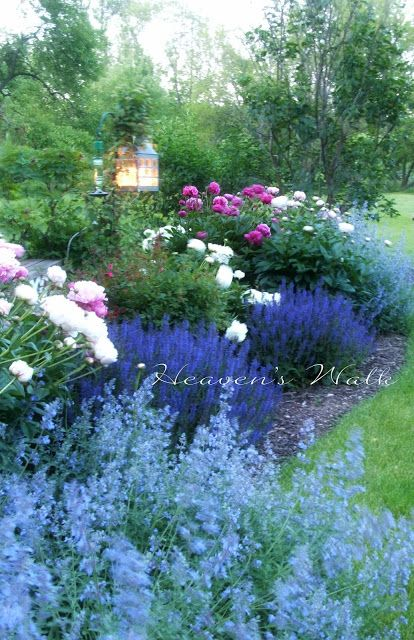 Got me thinking of adding lanterns to our fence in the back yard or on a post in the landscaping. A project that will have to wait til later, but very pretty.  ~Light blue flowers are Catmint, dark blue-purple are Salvia Blue Friesland .