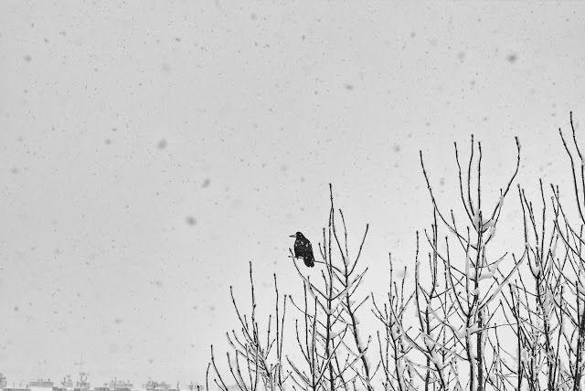 Goya: Zasiedzeł zimowy
