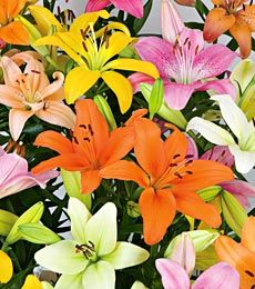 spring bloom!: Lilies Mixed, White Flowers, Flowers Farms, Asiatic Lilly, Shades Asiatic, Pastel Shades, Spring Bloom, Asiatic Lilies, Colors Asiatic