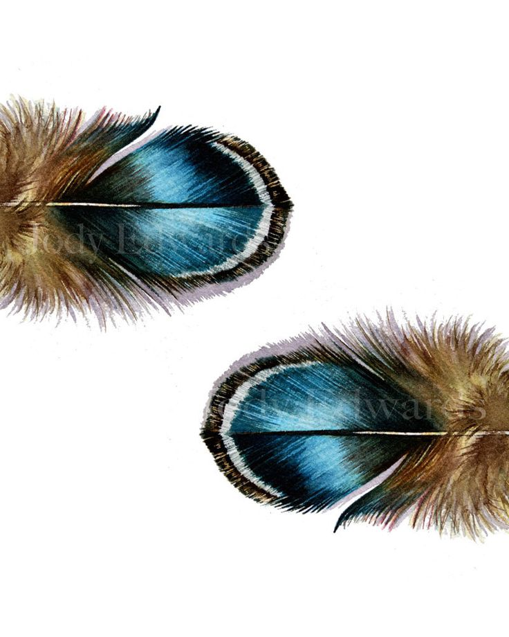 Blue Feathers Twins - Archival quality print
