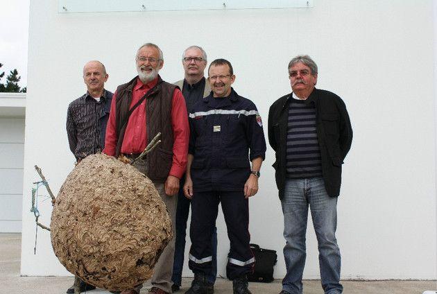 En octobre, le nid du frelon asiatique peut atteindre 1 m de haut et 80 cm de large