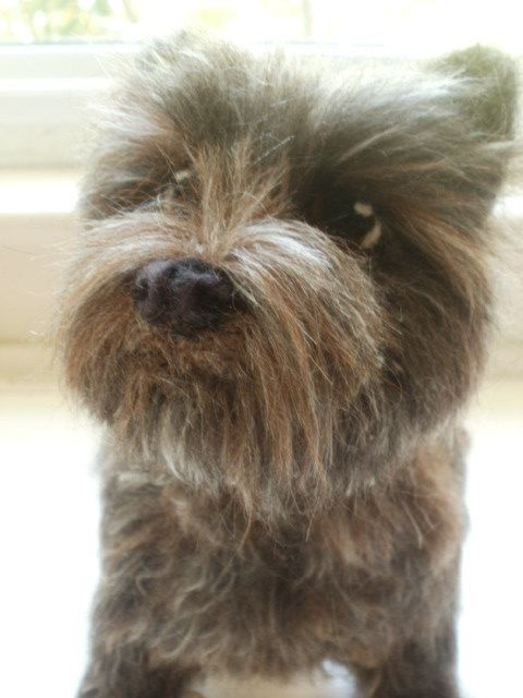 Cairn Terrier Artist Needle Felted Cairn Terrier by LaCharmour, $135.00