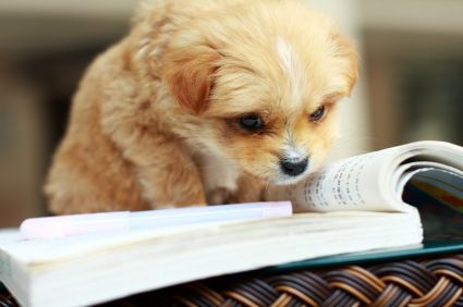 Google Image Result for http://www.gooddeals.com/files/prfiles/puppy%2520reading.jpg