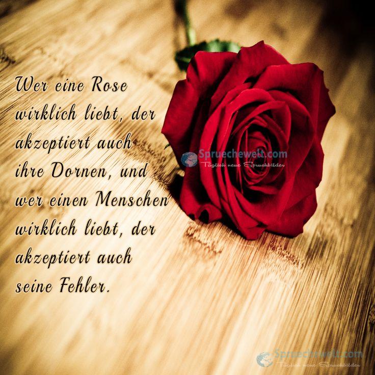 Wer eine Rose wirklich liebt