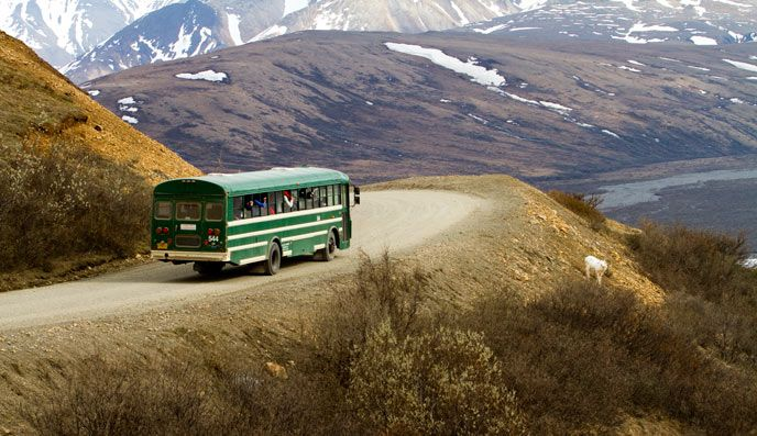 One of the green shuttle busses in Denali Park. These offer transportation into the park at a great price, but are not guided tours. They do stop for bathroom breaks and photo opportunities, however.