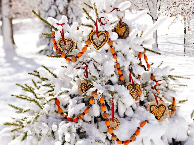 Bird seed ornaments hanging on outdoor tree ♥