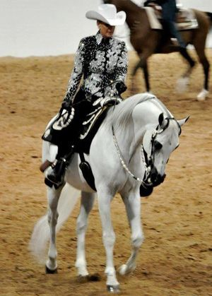 Sshameless was named reserve national western pleasure champion in the US in 2010.