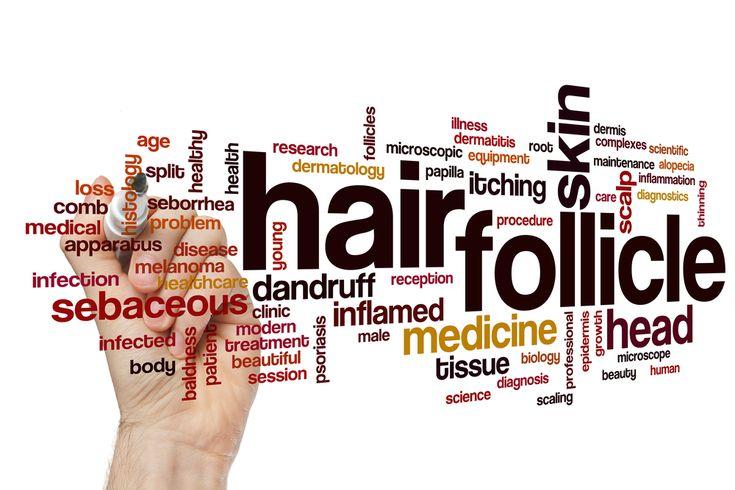 Hair follicle collage