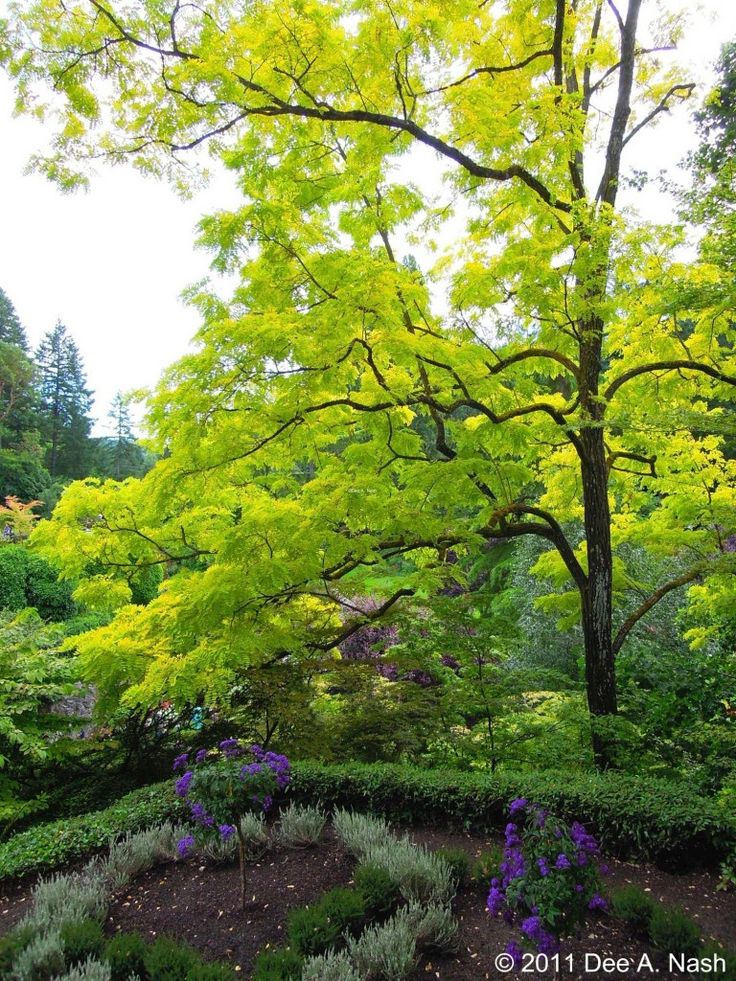 Garden Design Victoria Bc 403 best victoria bc images on pinterest | vancouver island