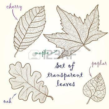 hojas de otoño dibujo: Colección de hojas de cerezo, roble, arce, álamo