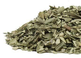 Foglia d'oliva è usato generalmente nel formato secco - tradizionalmente usato come tè,   utilizzato con successo in estratti e capsule. dovrebbe essere preso con i pasti. Sicurezza dell'erba durante la gravidanza non è stata stabilita. . Un'erba eccellente per l'uso in protezione incantesimi nonché lussuria e fertilità.