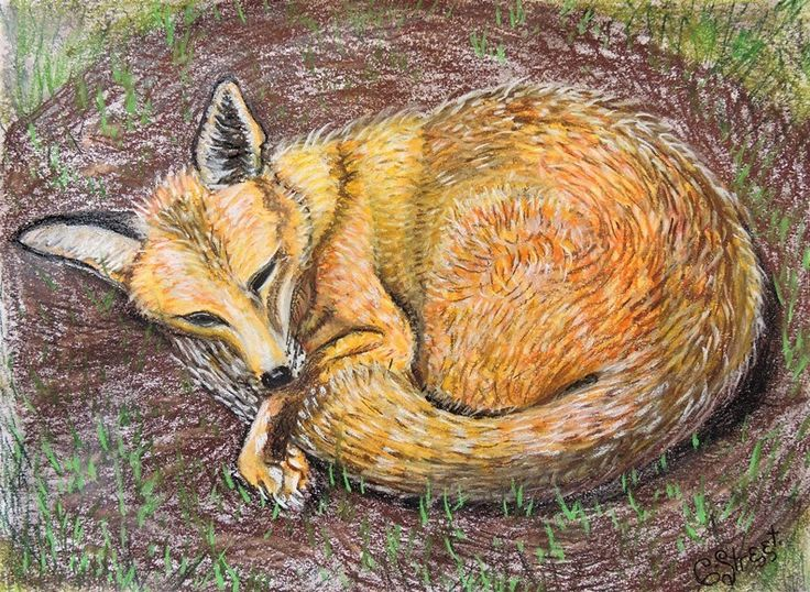 The Terrible Fate of the Fox.  Art and Blog by Caroline Street