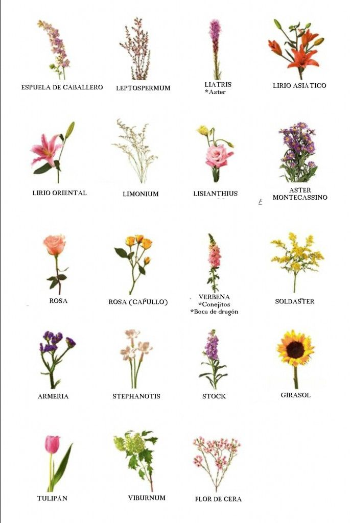 Nombre de flores                                                                                                                                                      Más