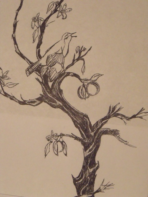 Mocking bird in an Orange tree ink sketch | art ☐ tree ...