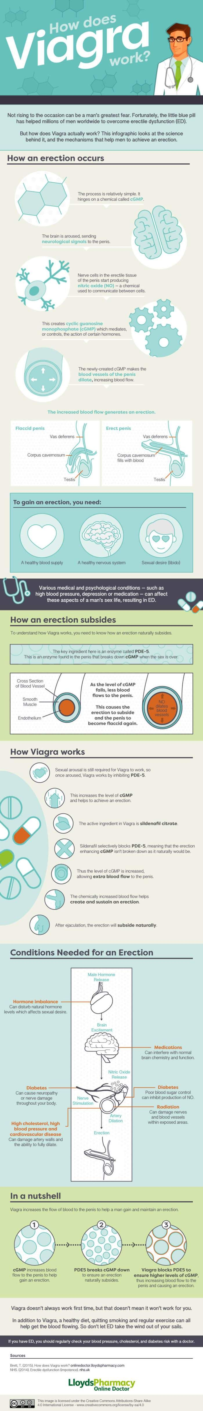 Viagra: How Does It Work?  [by Lloyds Pharmacy, Online Doctor -- via #tipsographic]. More at tipsographic.com