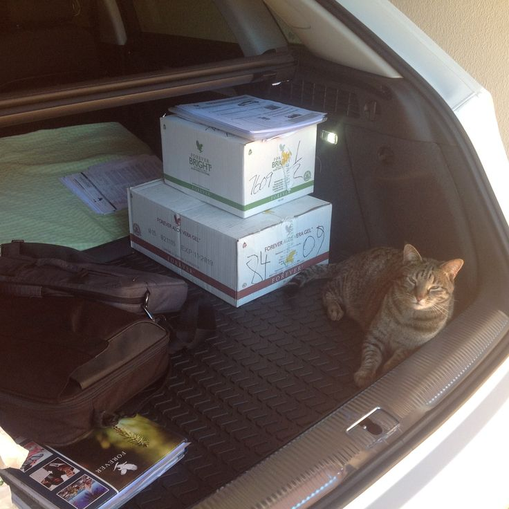 My kitty know it's travel time again and want to go with, going Greece to far for her raflp2.flp.com