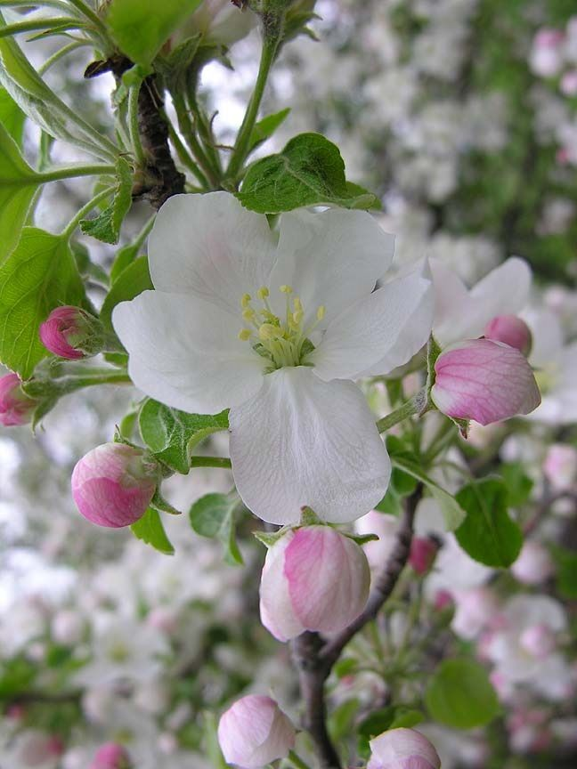 37 best flores blancas images on Pinterest | White flowers, Exotic ...