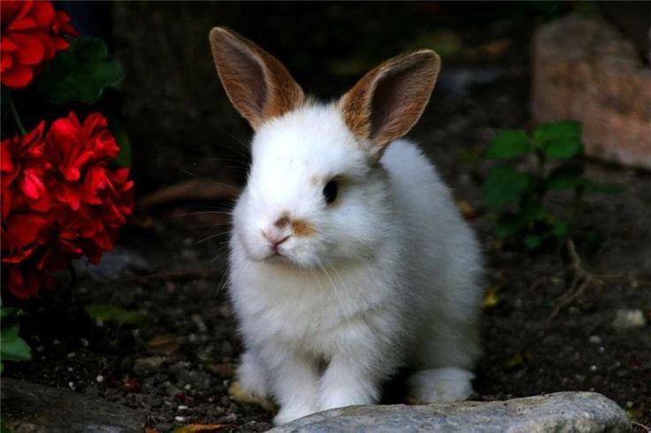 кролик ,забавный .