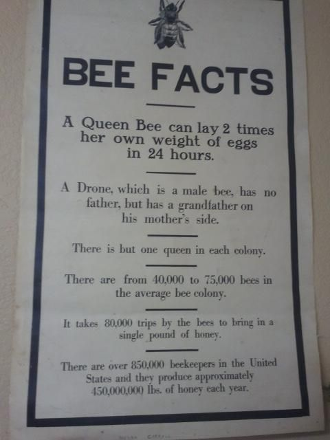 More #bee facts! pic.twitter.com/6cJXGBTx