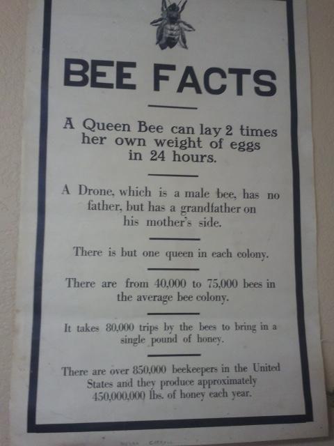 More #bee facts! pic.twitter.com/6cJXGBTx
