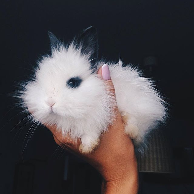 Lol so cute. We've always declared that we would get a husky and I would get a bunny. Now that Siah is here when he gets a little older we'll get our husky and he can name him and when RaiRai comes along when she's about 5 or 6 we'll get a bunny of her choice and let her name it.