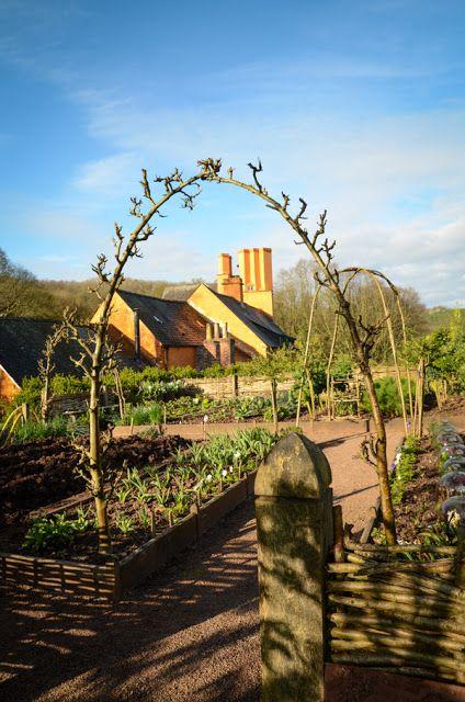 Lins Blogg: Innspirasjon - å trene frukttrær - espalie - eplehekk