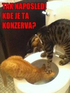 Kočičí hádka o konzervu