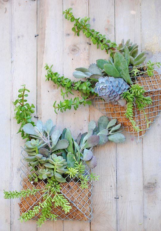 Diy: Small Succulent Wall Planter - #Flowers,PlantsPlanters #Planter #Succulent #Wall