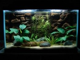 How to Clean Aquarium Sand. Don't let old myths fool you, sand is very easy to clean.