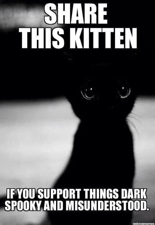 I have a black kitten I love horror and creepypastas but IM not that dark'n stuff. I do like spookey things tho