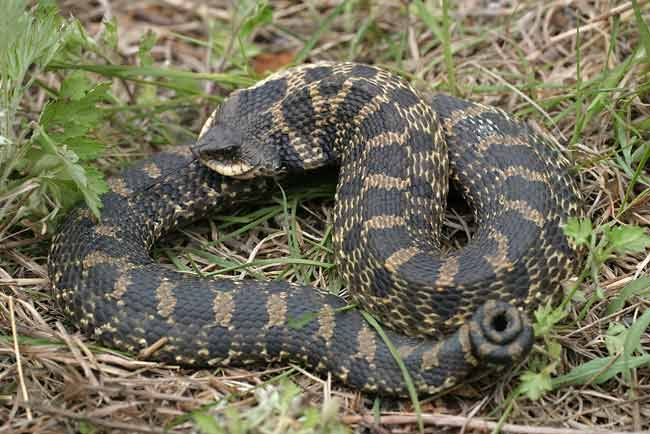 Snakes in Mississippi: Everything You Need to Know - newsms.fm