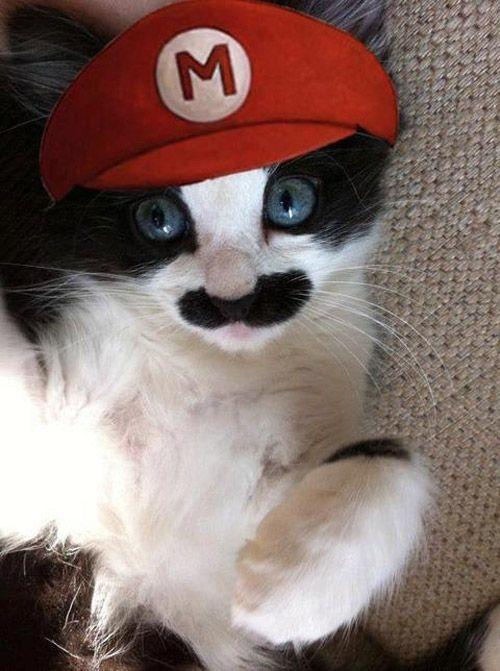 Gato disfrazado de Mario Bros.