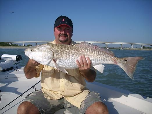 Best 25 mullet fish ideas on pinterest barbecued fish for Mullet fish florida