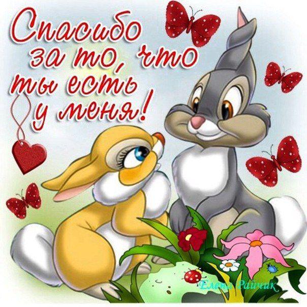 Открытки с добрым утром для любимой жены с признанием в любви, рождение открытка роза