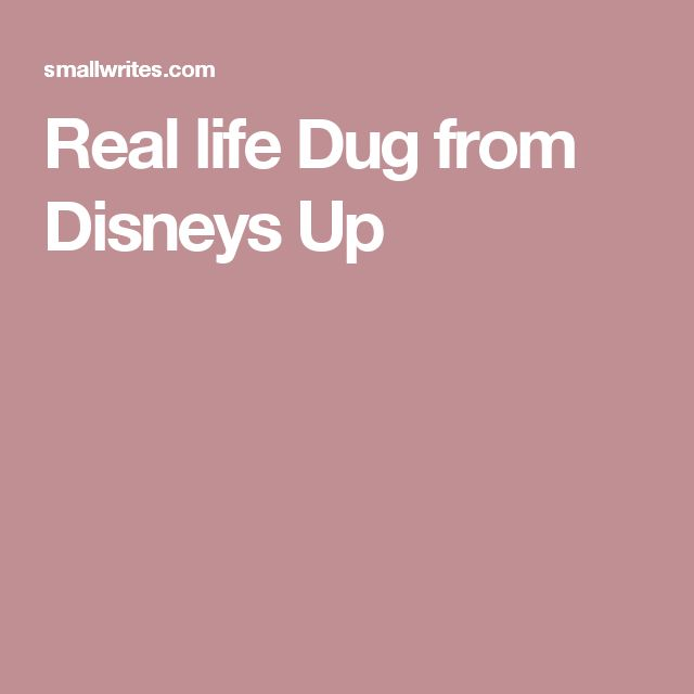 Real life Dug from Disneys Up