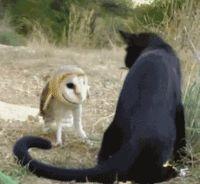 An Owl ~ Versus A Cat!