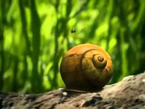 Vidéos publiées par Court métrage   Minuscule - Hyperactive.mp4