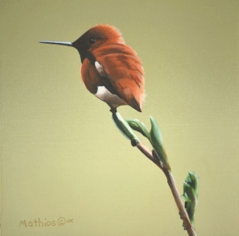 Spring Rufous, painting by artist Peter Mathios