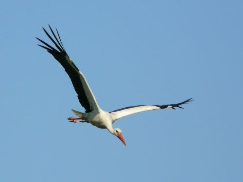 költöző madarak - Google keresés