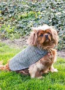 Made from the finest harris tweed in a traditional houndstooth check, this jacket is ideal to keep your dog warm and very stylish. The perfect Irish gift for a trendy dog! Made from 100% Pure New Wool Lining:  65% Polyester/ 33% Viscose/ 2% Elastane Dry Clean Only Colour: Houndstooth Harris Tweed