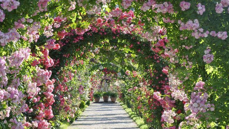 Le jardin de roses nouvelles Beutig de Baden-Baden (Allemagne) se trouve dans le parc thermal de cette ville d'eau proche de la frontière française. En juin, ses innombrables arches ornées de rosiers grimpants crééent une atmosphère absolument féérique.