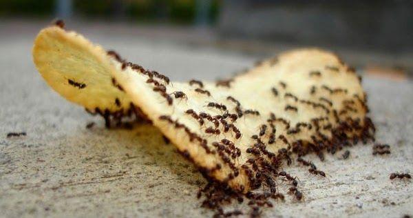 Το έξυπνο κόλπο για να εξαφανίσετε τα μυρμήγκια από το σπίτι!