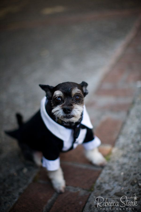 EEEEEeeeeee!! This one makes me laugh out loud :) You fancy, huh? | 30 Dogs Who Were In The Wedding